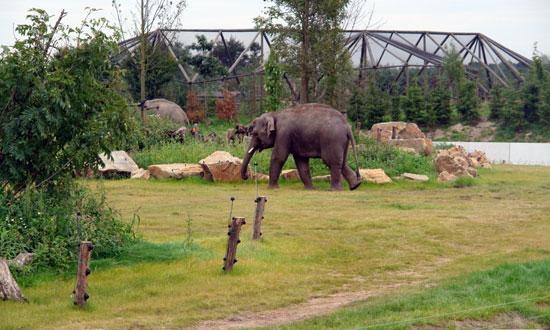 Eindhoven_dierenrijk-nuenen