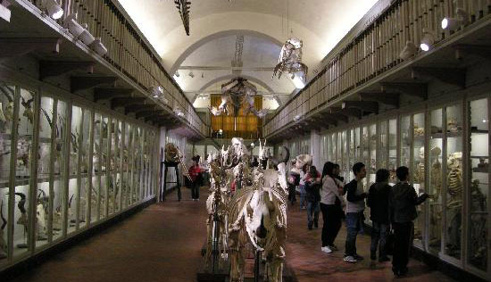 Florence_museum-la-specola