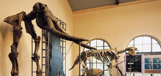 Madrid_musea-Museo-Nacional-de-las-Ciencias-Naturales.jpg