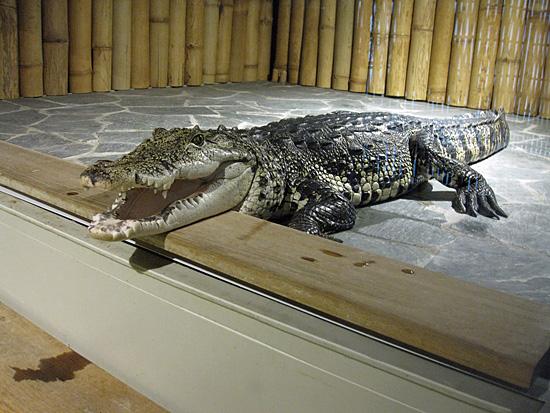 Praag_krokodillen_in_praag_3.JPG