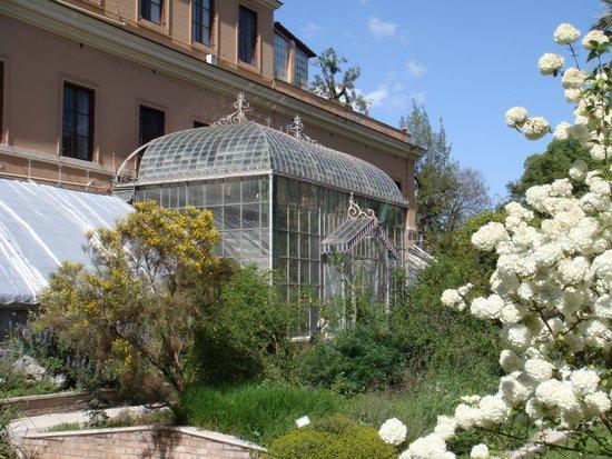 Rome_Orto_botanico_roma.JPG